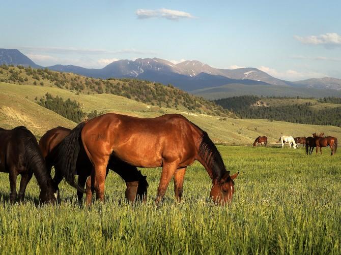 C Lazy U horses-meadow11-670x502